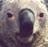 福熊's 的頭像